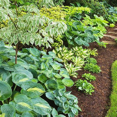 Shade Garden Ideas Shade Garden Ideas