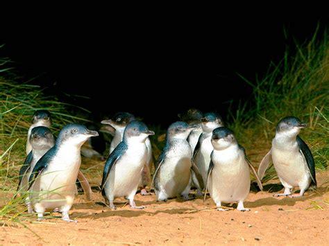 parks island phillip island australia