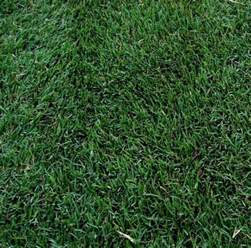 5 best grass types for arizona lawns