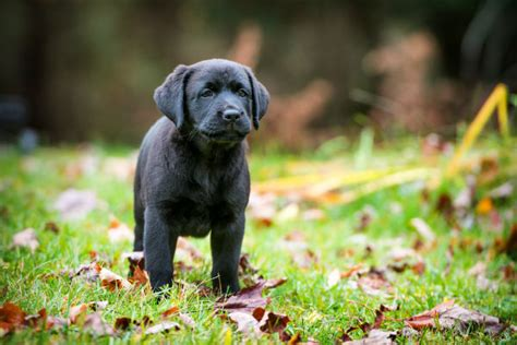 unique puppy names unique names american kennel club