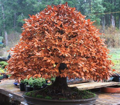 Beautiful Indoor Plants 22 best trees for bonsai best bonsai plants balcony