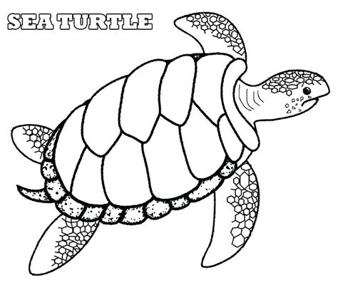 ninja turtles valentines day coloring pages olive tree coloring page goodjelly co