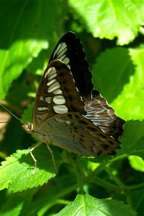 butterfly house sioux falls pin by cissy baker on been there done that pinterest