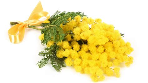 fiore della donna perch 233 l 8 marzo storia e libri per meglio capire la