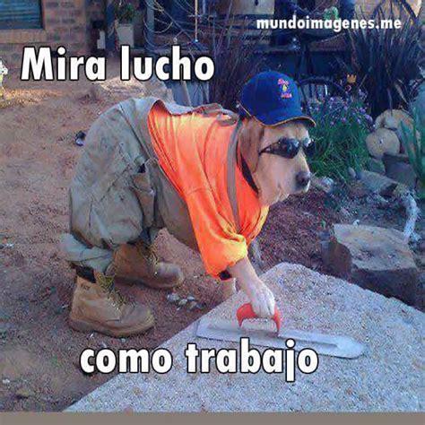 imagenes graciosos de animales 1024 best images about jaja on pinterest el meme ja ja