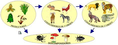 cadena alimenticia hongos y bacterias cadena alimentaria