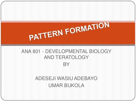 developmental pattern formation insights from physics and biology pattern formation