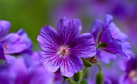 types of purple 34 different types of purple flowers for your garden