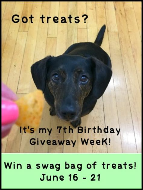 7th Birthday Giveaways - dolly s 7th birthday giveaway week swag bag friday dog treats