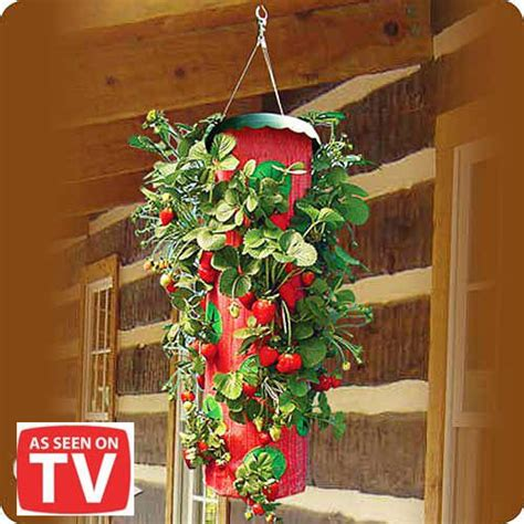 Topsy Turvy Strawberry Planter by Topsy Turvy Strawberry Planter As Seen On Tv Id 4436761