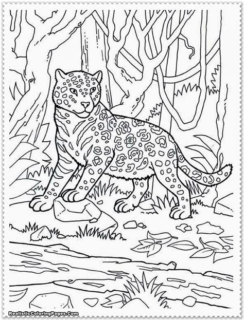 coloring page jungle realistic jungle animal coloring pages realistic