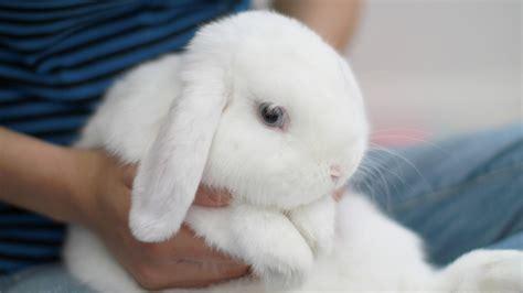 best bunny the cutest bunny