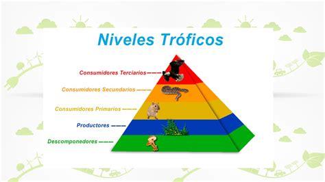 cadenas alimenticias y niveles tróficos niveles tr 243 ficos y cadenas alimenticias