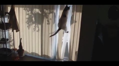 cat is trying to catch a bird behind the window funny