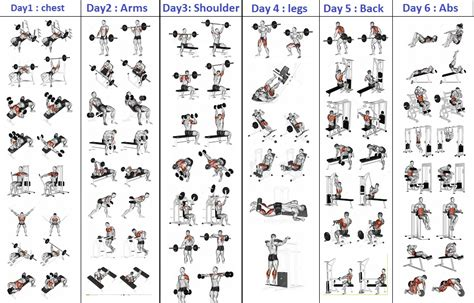 top 5 day workout routine for all bodybuilding