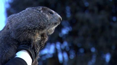 groundhog day 2018 groundhog day 2018 punxsutawney phil makes annual weather