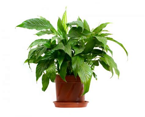 common household plant names mr kate ask mr kate what are the most difficult houseplants to kill