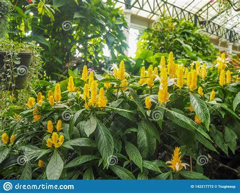 yellow flowers  indoor garden stock photo image