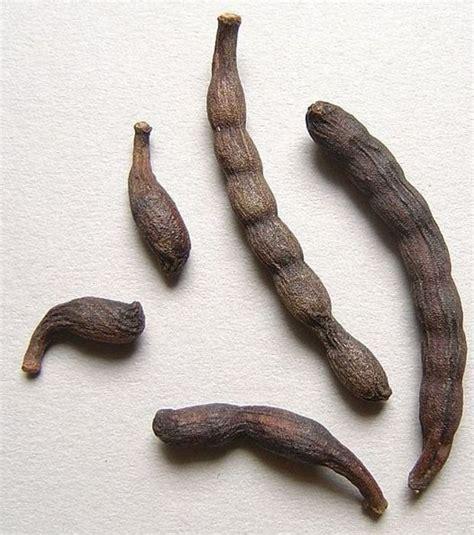 fruit d afrique photo ce fruit s 233 ch 233 contient des graines de s 233 lim