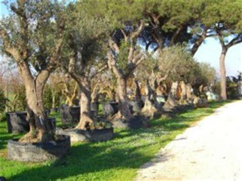 armeni giardini aziende agricole commerciali vendita piante e fiori in