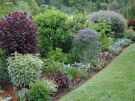 arbusti fioriti perenni pin arbusti ricanti vite perenni gypsophila e