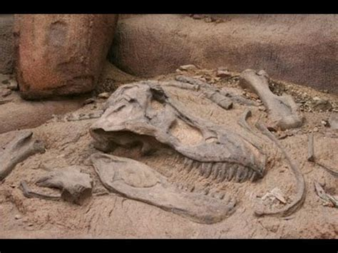 unearthing dinosaur remains : documentary on finding