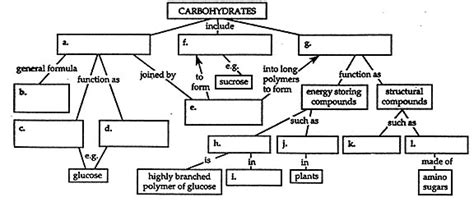 carbohydrates concept map concept map on carbohydrates