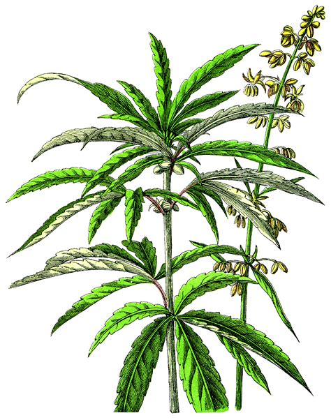 canapé dwg file ndp cannabis png wikimedia commons