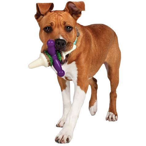 busy toys for dogs busy buddy large