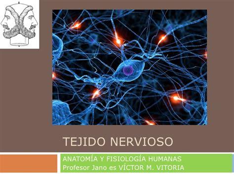 el tejido del cosmos presentacion tejido nervioso
