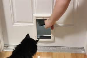 Exterior Cat Door 20 Types Of Cat Doors Interior Exterior Doors