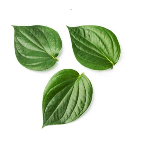 Betel Leaf Daun Sirih Essential 5ml betel leaf moksha lifestyle products