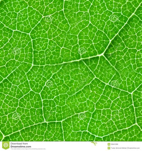 texture leaf pattern green leaf seamless texture stock photo image 35841066
