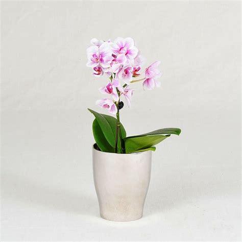 cura delle orchidee in appartamento orchidee cura orchidee come curare le orchidee