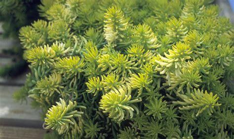 piante da cortile piante grasse da esterno come sceglierle e curarle