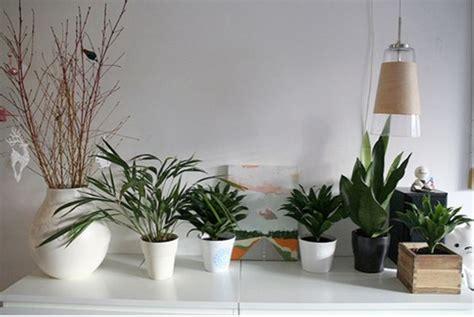 cuidado plantas interior consejos para el cuidado de las plantas de interior