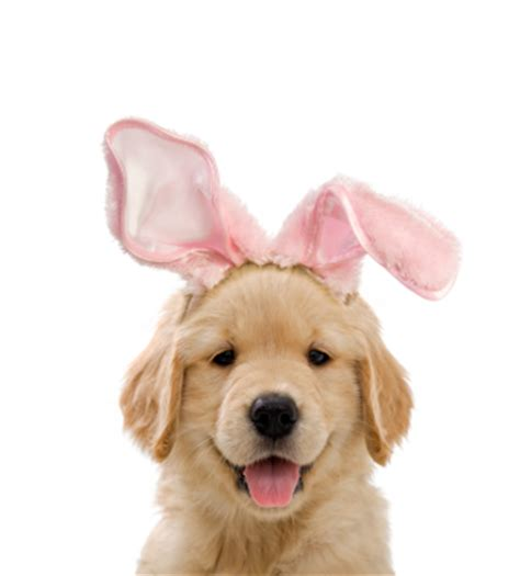 easter puppy easter restaurant reservations celebrations to make sunday special opentable