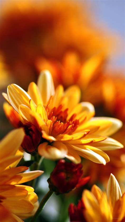 fiori per sfondo sfondi fiori 44 immagini