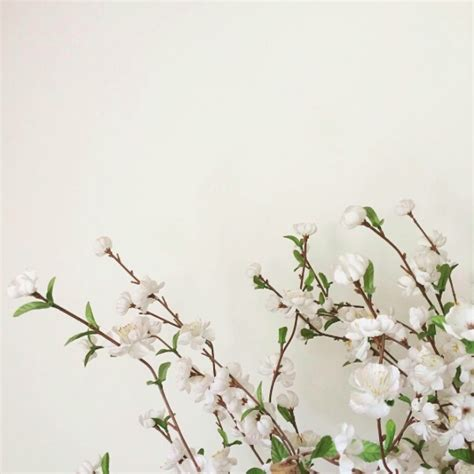 flower wallpaper aesthetic flowers image 3447050 by helena888 on favim com