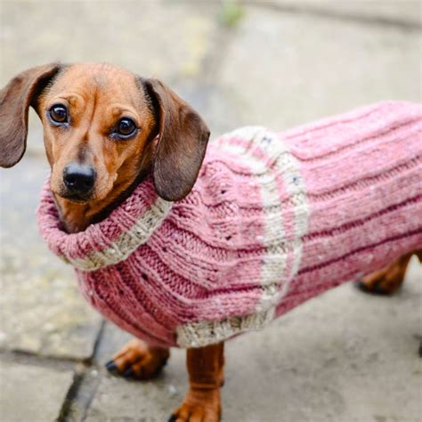 dave the stash busting dachshund knit flat in the dogs in jumpers book redhound for dogs