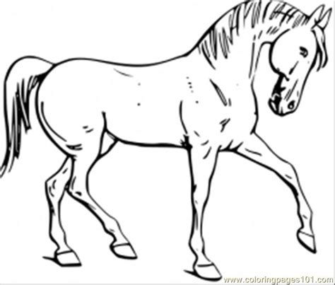 cool horses coloring pages
