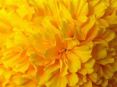 yellow flower wallpaper for walls yellow flower wallpaper 1094 1600x1200 px hdwallsource com