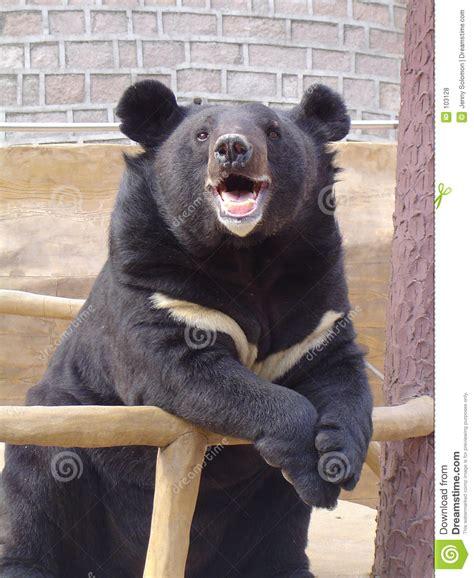 Bears Smile smiling stock photo image of happy