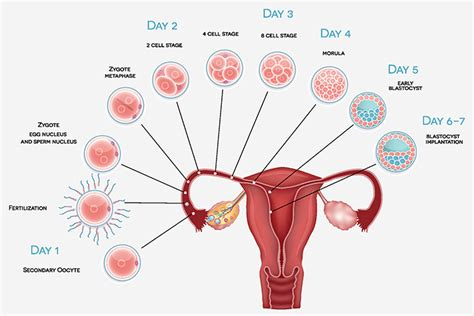 how long does bleeding last after a c section 8 essential implantation symptoms
