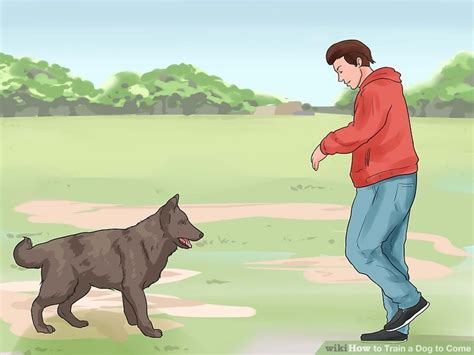 how to a puppy to come how to a to come with pictures wikihow