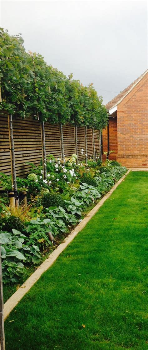 privacy trees for backyard outdoor ideas privacy trees dressing up small trees corner