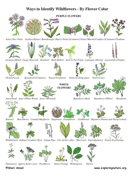 the color purple book club discussion questions wildflower identification by color wildflower id book