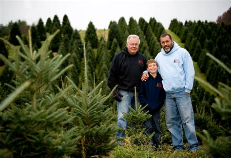 boyd mountain christmas tree farm cut your own christmas