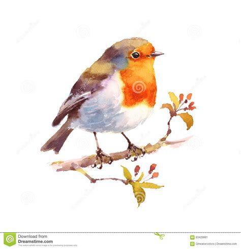lade egiziane robin watercolor bird illustration m 229 lade stock