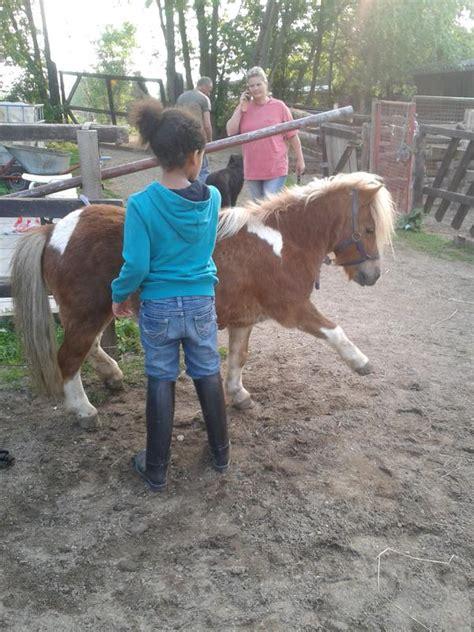 Shettys Suchen Ein Zuhause In Koblenz Pferde Kaufen Und